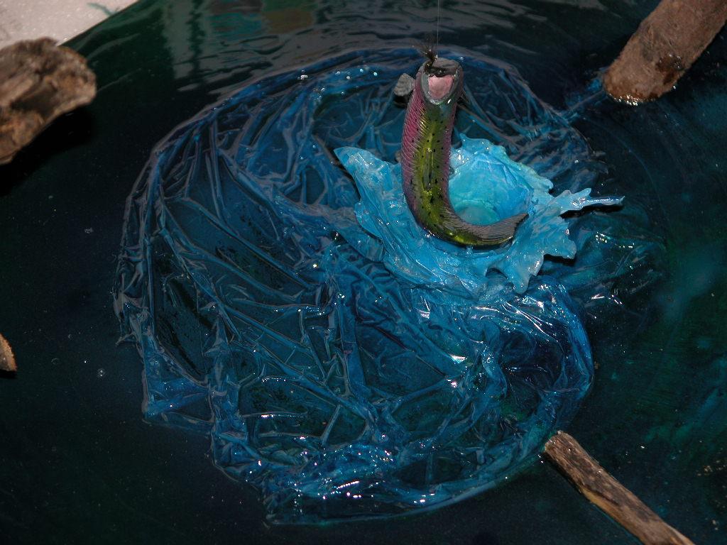 Sampei Salmon fishing