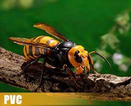 PV10816  大黃蜂 (PVC)