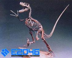 RT0294 1/20 Raptor