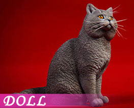 DL3345 1/6 British Shorthair Cat B (DOLL)