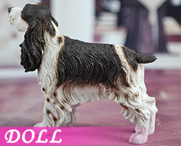 DL2210 1/6 Springer Spaniel A (DOLL)