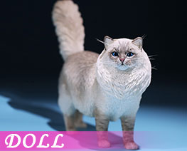 DL2404 1/6 Ragdoll B (DOLL)