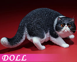DL2410 1/6 Exotic Shorthair C (DOLL)