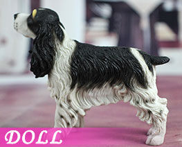 DL2211 1/6 Springer Spaniel B (DOLL)