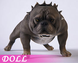 DL3673 1/6 Bully Dog C (DOLL)