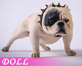 DL3674 1/6 Bully Dog D (DOLL)