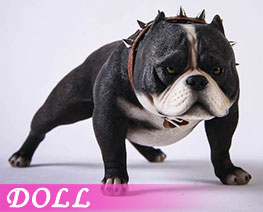 DL3671 1/6 Bully Dog A (DOLL)