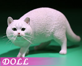 DL2418 1/6 British Shorthair  (DOLL)