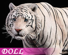 DL1858 1/6 White Tiger (DOLL)