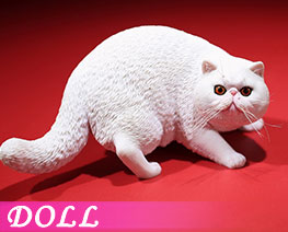 DL2411 1/6 Exotic Shorthair D (DOLL)