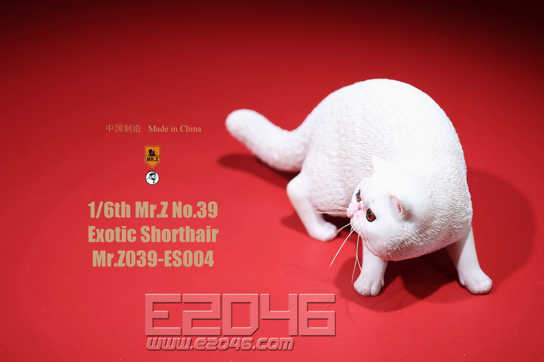 Exotic Shorthair D (DOLL)