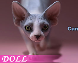 DL2664 1/6 Canadian Hairless Cat B (DOLL)