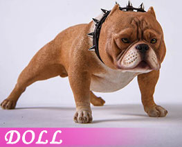 DL3675 1/6 Bully Dog E (DOLL)
