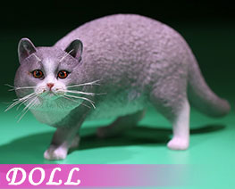DL2416 1/6 British Shorthair C (DOLL)