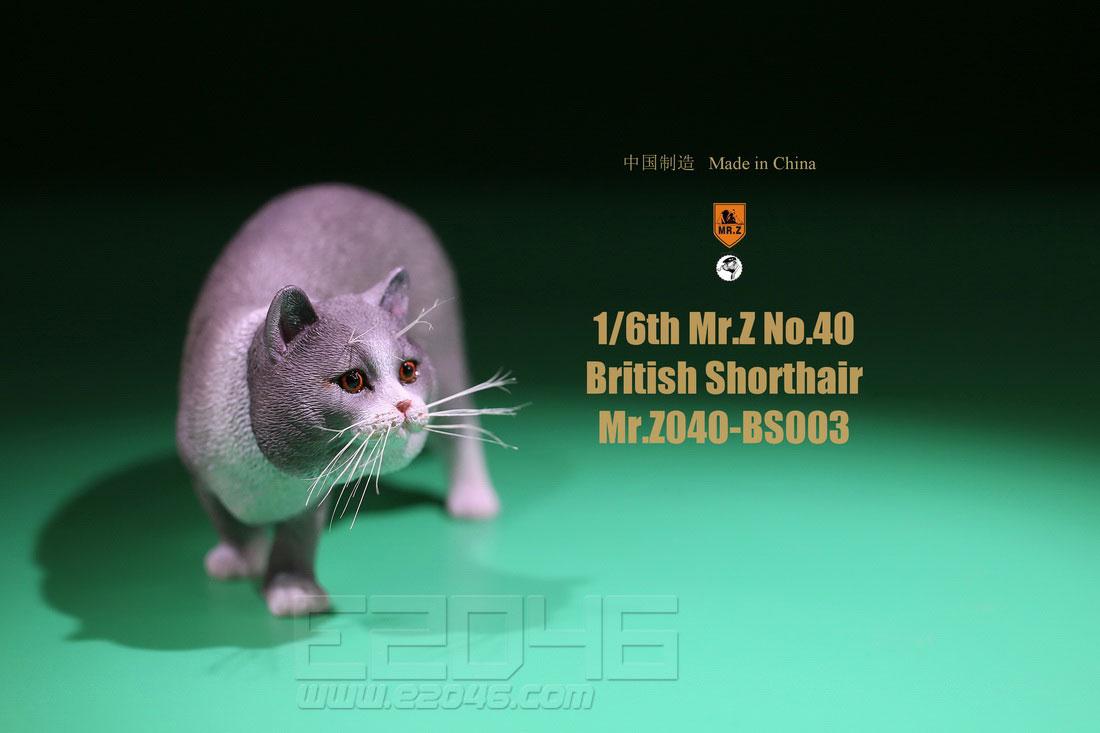British Shorthair C (DOLL)