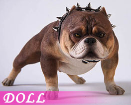 DL3676 1/6 Bully Dog F (DOLL)