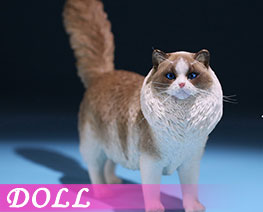 DL2403 1/6 Ragdoll A (DOLL)