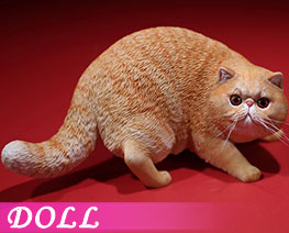 DL2408 1/6 Exotic Shorthair A (DOLL)