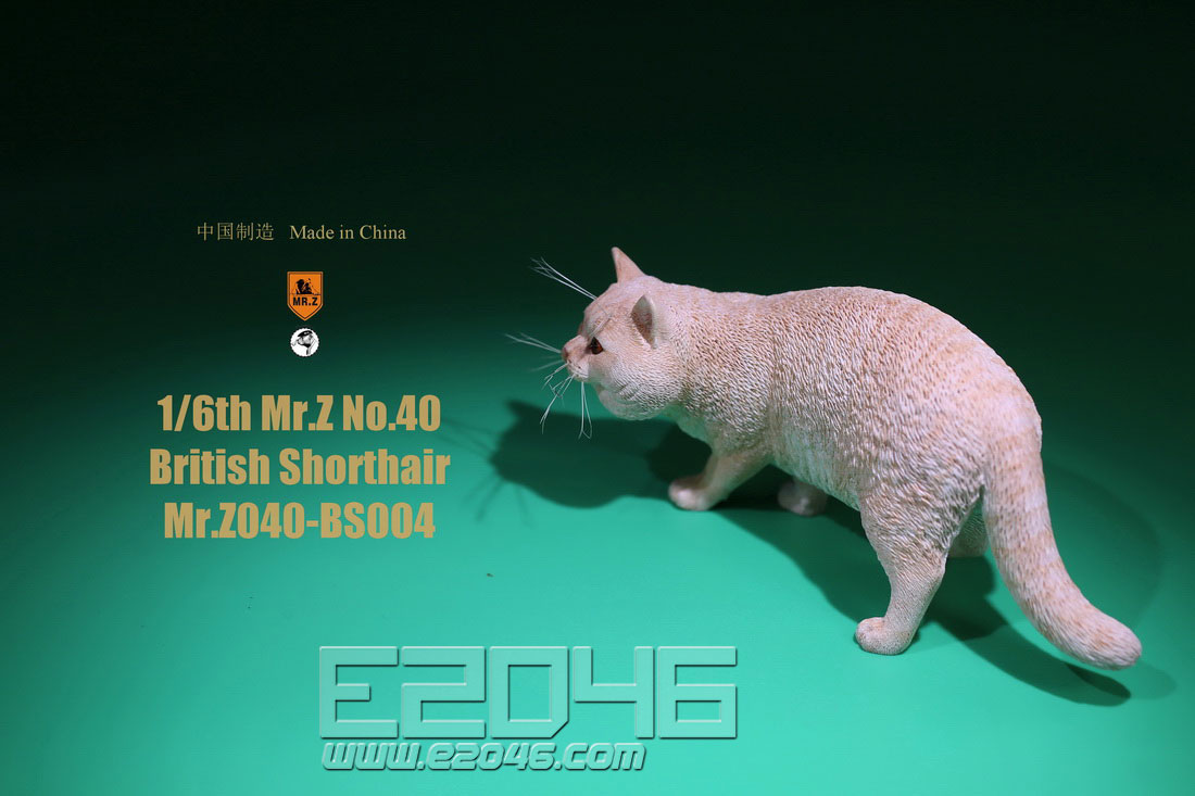 British Shorthair D (DOLL)