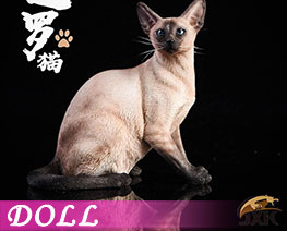 DL2049 1/6 Siamese Cat Squatting C (DOLL)