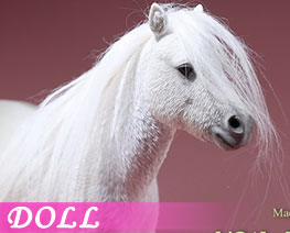 DL2668 1/6 Shetland Pony A (DOLL)