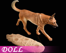 DL2243 1/6 Malinois A (DOLL)