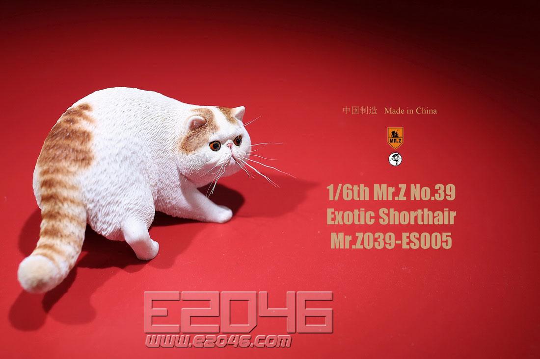 异国短毛猫植须版 E (人偶)