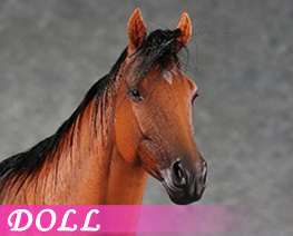 DL4316 1/6 Horse C (DOLL)