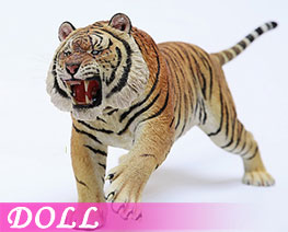 DL2422 1/6 Panthera Tigris Altaica C (DOLL)