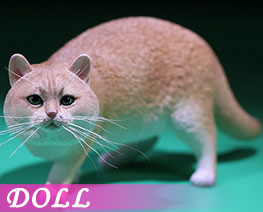 DL2415 1/6 British Shorthair B (DOLL)