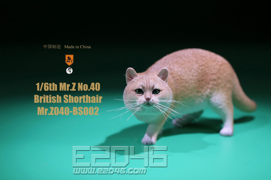 British Shorthair B (DOLL)