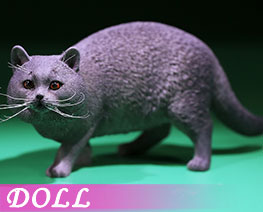 DL2414 1/6 British Shorthair A (DOLL)
