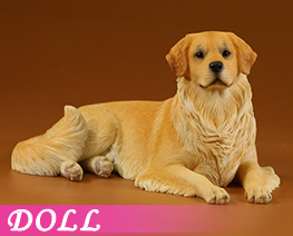 DL4630 1/6 Golden Retriever 2.0 E (DOLL)