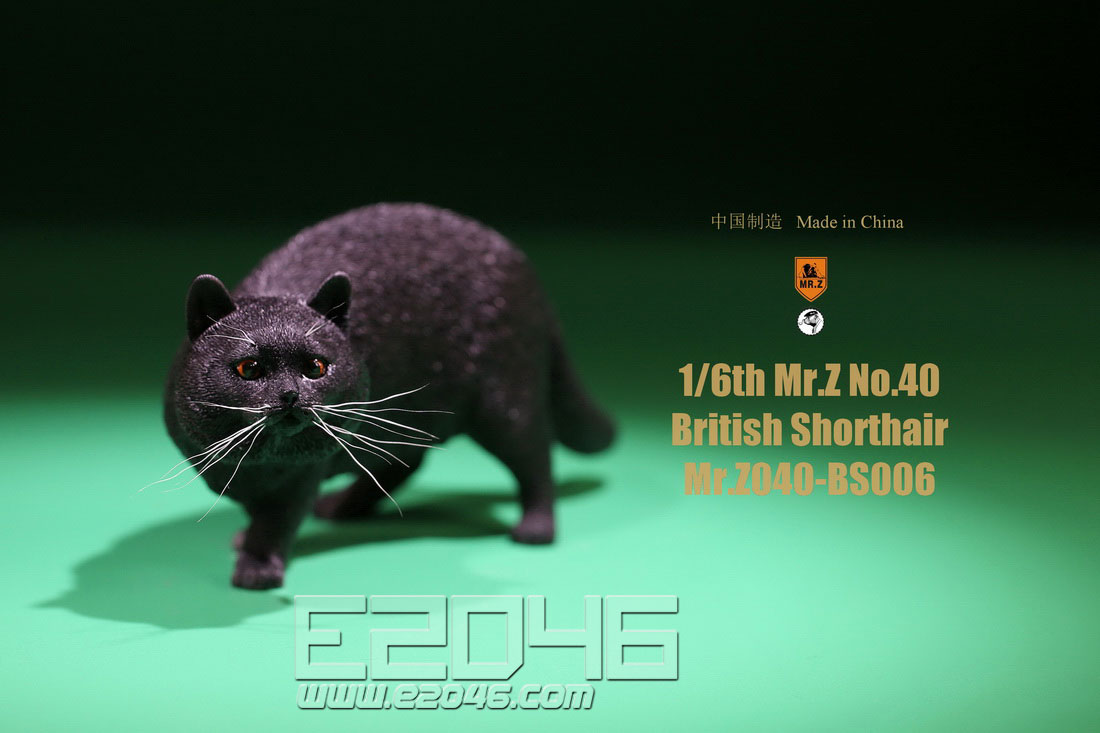 British Shorthair F (DOLL)