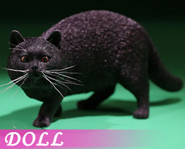DL2419 1/6 British Shorthair F (DOLL)