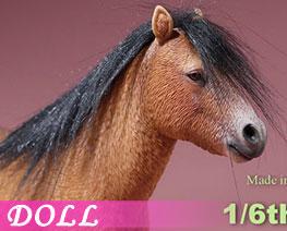 DL2669 1/6 Shetland Pony B (DOLL)