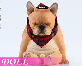 DL4024 1/6 French Bulldog E (DOLL)