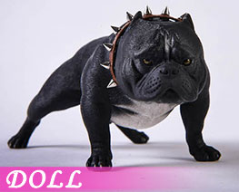 DL3672 1/6 Bully Dog B (DOLL)