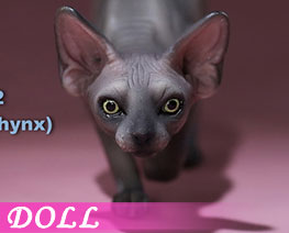 DL2667 1/6 Canadian Hairless Cat E (DOLL)