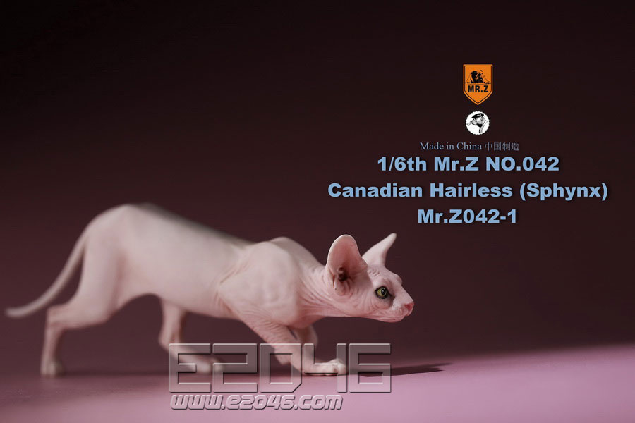 Canadian Hairless Cat A (DOLL)