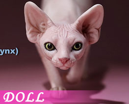 DL2663 1/6 Canadian Hairless Cat A (DOLL)