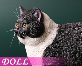 DL4614 1/6 Fat Cat C (DOLL)
