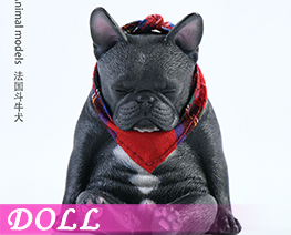 DL4020 1/6 French Bulldog A (DOLL)