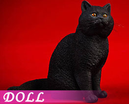 DL3343 1/6 British Shorthair Cat A (DOLL)