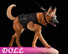DL2246 1/6 Malinois D (DOLL)