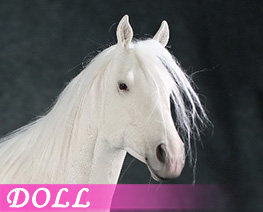 DL4317 1/6 Horse D (DOLL)