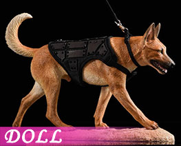 DL2245 1/6 Malinois C (DOLL)