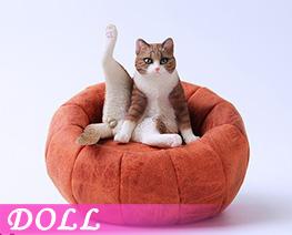 DL4684 1/6 懒猫 F (人偶)