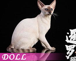 DL2047 1/6 Siamese Cat Squatting A (DOLL)